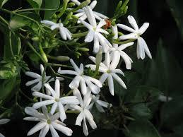 jui flower