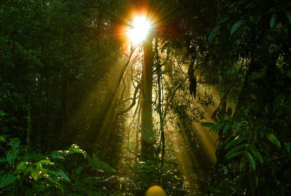 Rainforest_032013