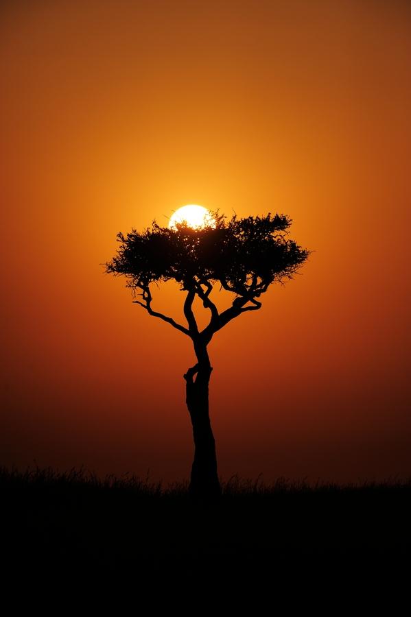masai mara sun rise pinterest