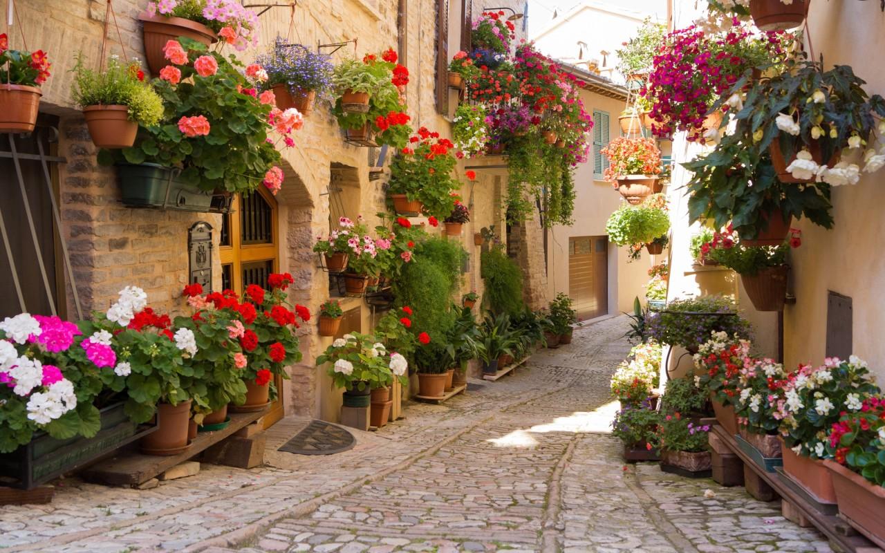 street-with-flowers-2K-wallpaper